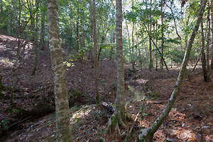90 Acre Hardwood Hills East Texas
