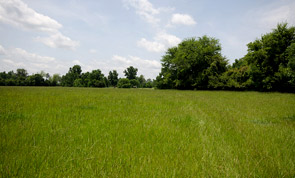 Beautiful Recreational or Livestock 113 Acre Ranch
